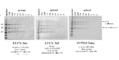 Figure 6. Limits of proteins detection on SDS-polyacrylamide gel by LUCY-506 and LUCY-565 proteins gel stains developed by us for Sigma-Aldrich Inc., in comparison with SYPRO Ruby stain (Invitrogen Corp.).